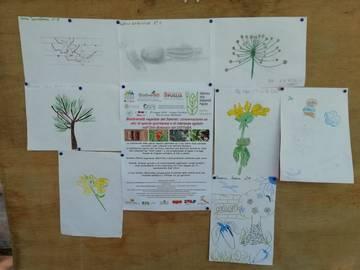 Winner drawings showing biodiversity themes